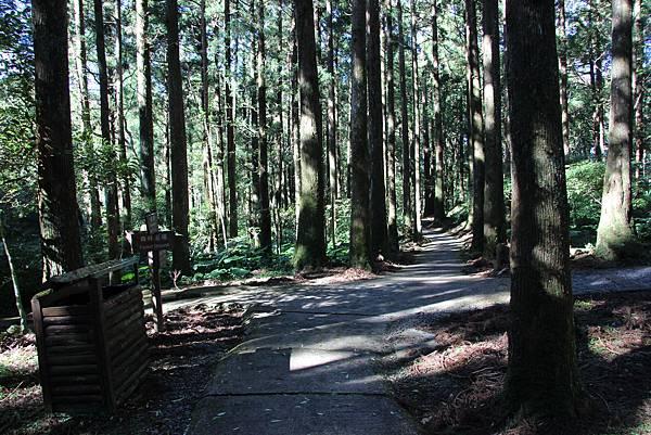 1119東眼山親子步道 (30).JPG