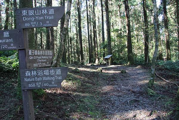 1119東眼山親子步道 (31).JPG