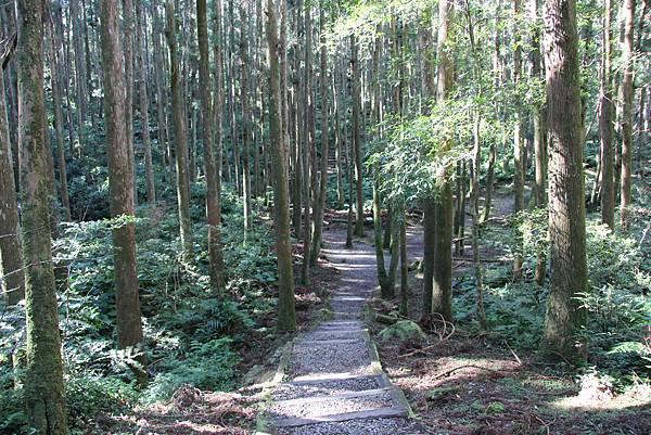 1119東眼山親子步道 (32).JPG