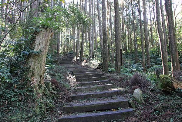 1119東眼山親子步道 (35).JPG