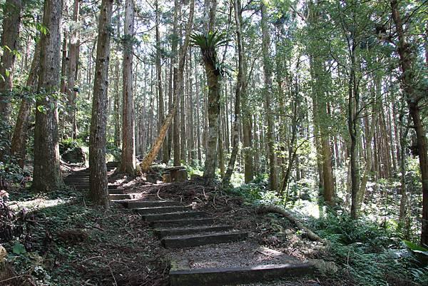 1119東眼山親子步道 (37).JPG