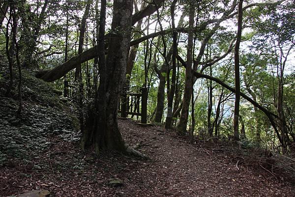 1119東眼山親子步道 (45).JPG