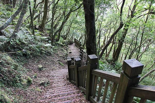 1119東眼山親子步道 (46).JPG