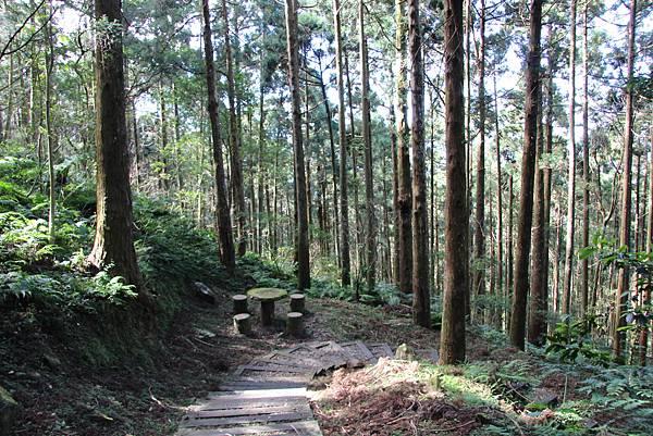 1119東眼山親子步道 (61).JPG