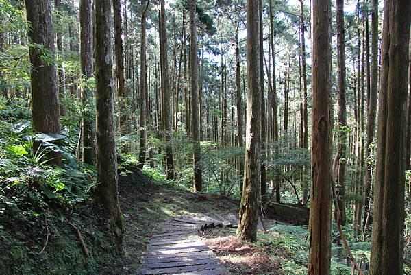 1119東眼山親子步道 (62).JPG