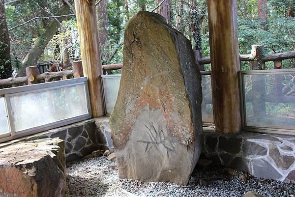 1119東眼山親子步道 (74).JPG