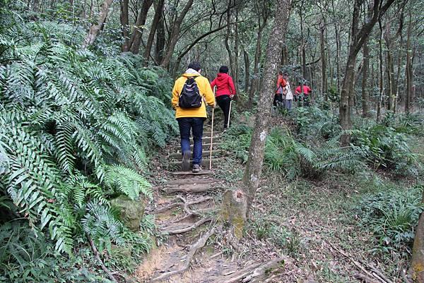 1210新山夢湖步道 (25).JPG
