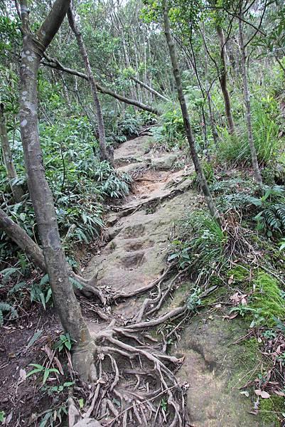 1210新山夢湖步道 (30).JPG