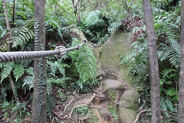 1210新山夢湖步道 (34).JPG