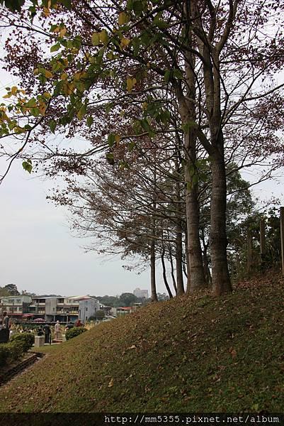 0204草嶺山 (11).JPG