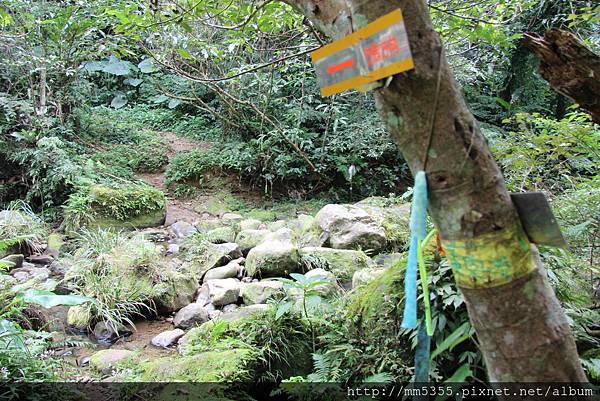 0204草嶺山 (48).JPG