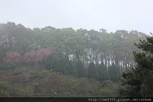 0311蓮臺山 (14).JPG