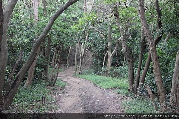1022羊稠森林步道 (9).JPG