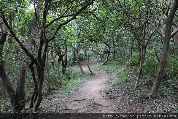 1022羊稠森林步道 (14).JPG