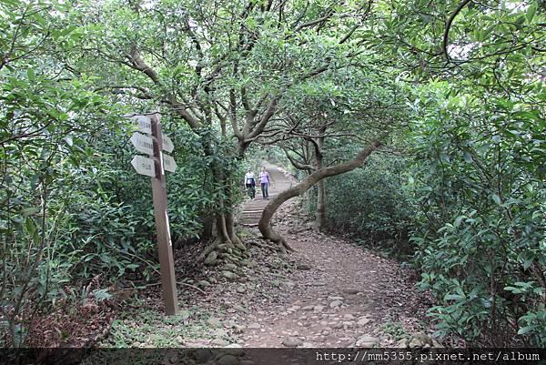 1022羊稠森林步道 (21).JPG