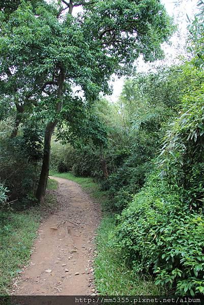 1022羊稠森林步道 (34).JPG
