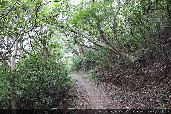 1022羊稠森林步道 (40).JPG