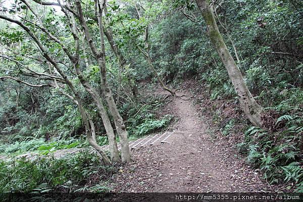 1022羊稠森林步道 (41).JPG