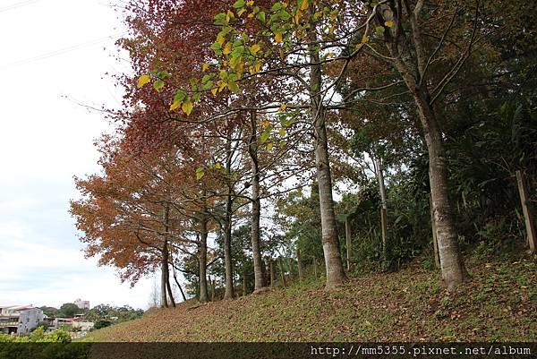 0121草嶺山 (7).JPG