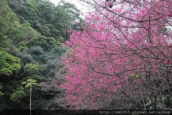 0127林口頂福巖森林步道 (4).JPG