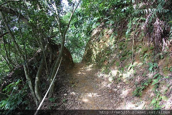 0127林口頂福巖森林步道 (45).JPG