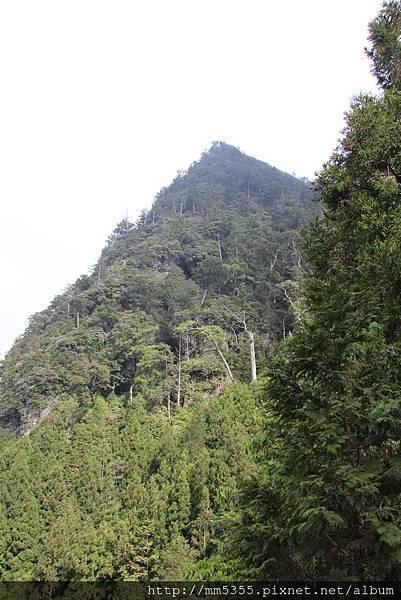 0512大鹿林道西線 (33).JPG
