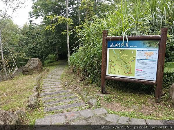 0616遊阿里山迷糊步道 (6).jpg