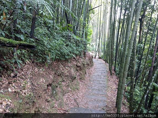 0616遊阿里山迷糊步道 (12).jpg