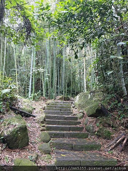 0616遊阿里山迷糊步道 (16).jpg