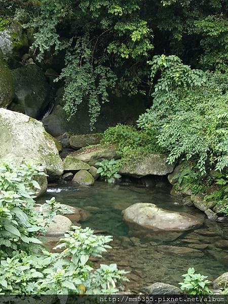 0616遊阿里山迷糊步道 (19).jpg