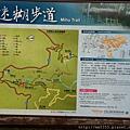 0616遊阿里山迷糊步道 (24).jpg
