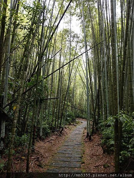 0616遊阿里山迷糊步道 (27).jpg