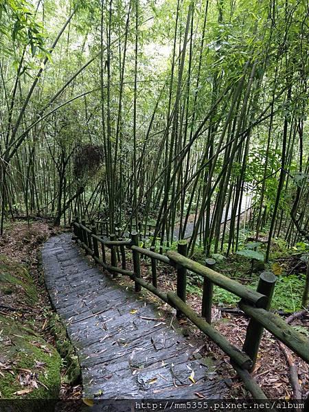 0616遊阿里山迷糊步道 (37).jpg