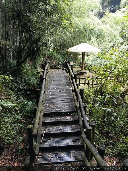 0616遊阿里山迷糊步道 (42).jpg
