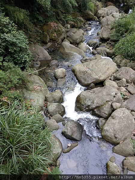 0616遊阿里山迷糊步道 (46).jpg