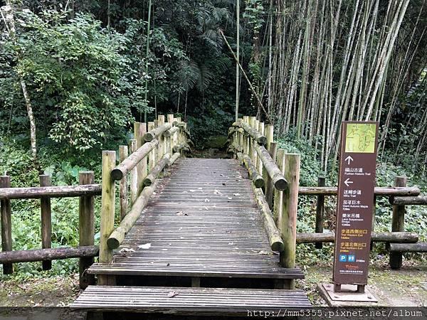 0616遊阿里山迷糊步道 (47).jpg