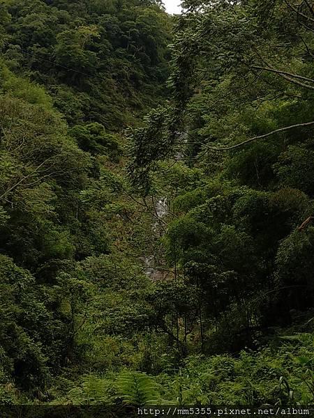 0616遊阿里山迷糊步道 (58).jpg