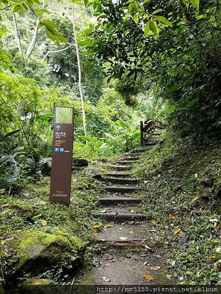 0616遊阿里山迷糊步道 (57).jpg