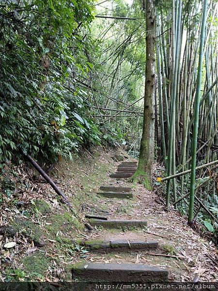 0616遊阿里山迷糊步道 (60).jpg