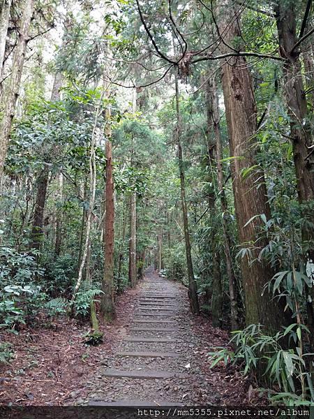 0616遊阿里山迷糊步道 (64).jpg