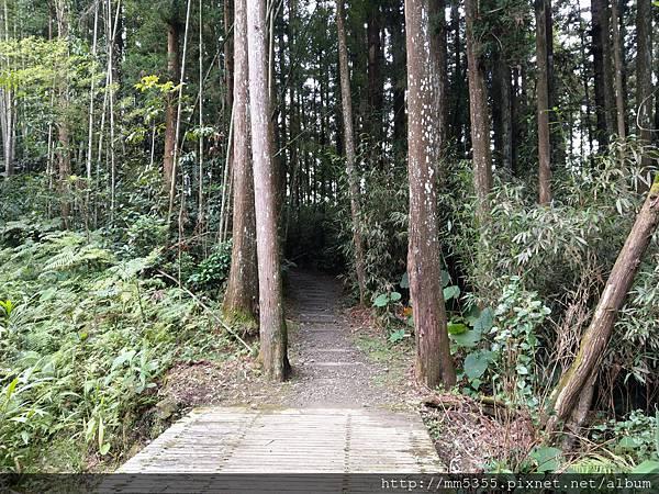 0616遊阿里山迷糊步道 (66).jpg