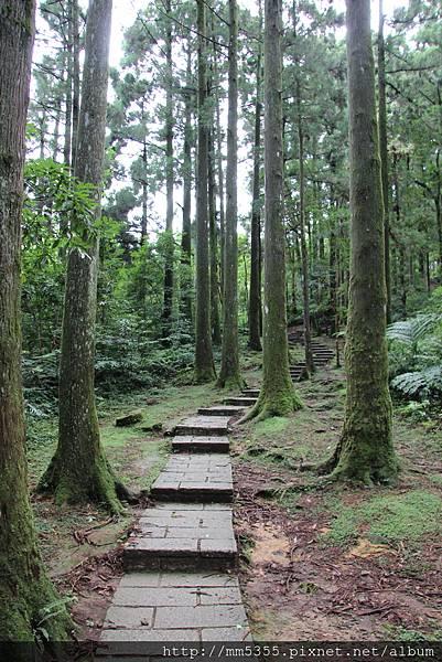 0623東眼山自導式步道 (12).JPG