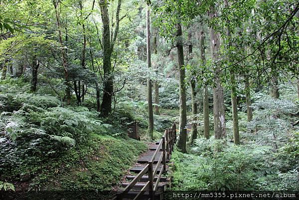 0623東眼山自導式步道 (13).JPG
