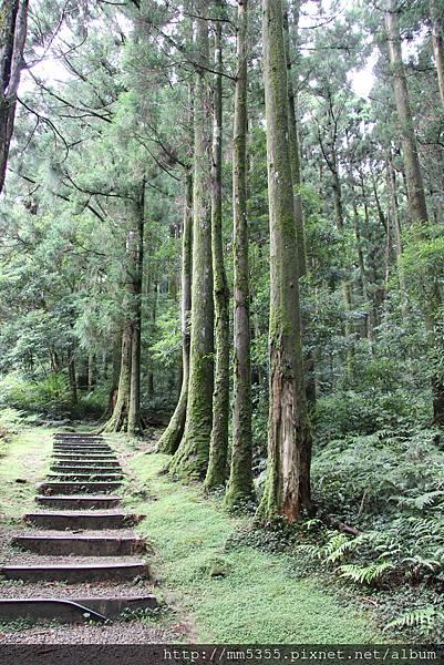 0623東眼山自導式步道 (14).JPG