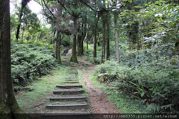 0623東眼山自導式步道 (18).JPG