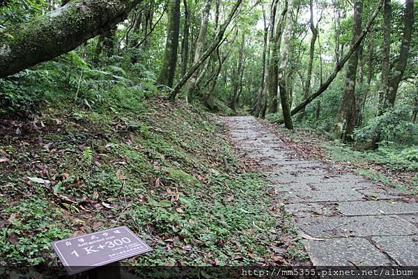 0623東眼山自導式步道 (26).JPG