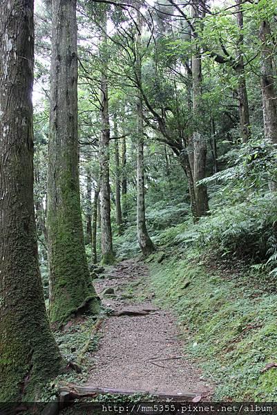0623東眼山自導式步道 (43).JPG