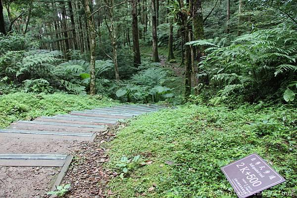 0623東眼山自導式步道 (47).JPG