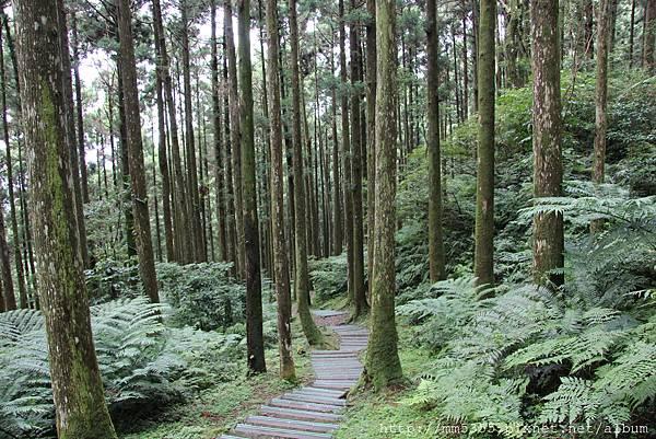 0623東眼山自導式步道 (50).JPG