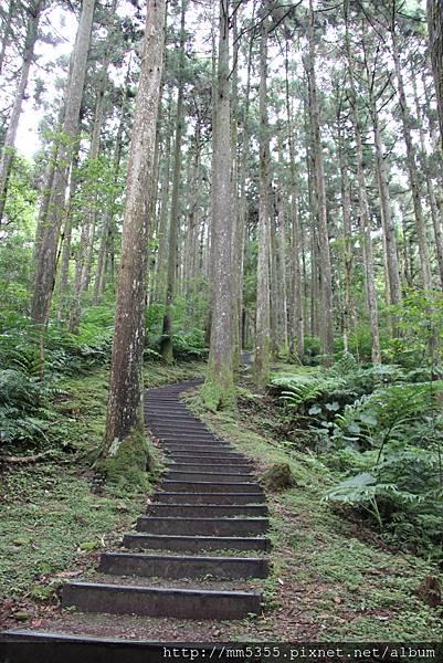 0623東眼山自導式步道 (53).JPG
